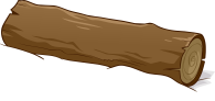 shape 31